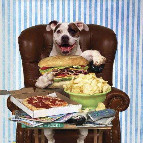 How to improve appetite of the dog
