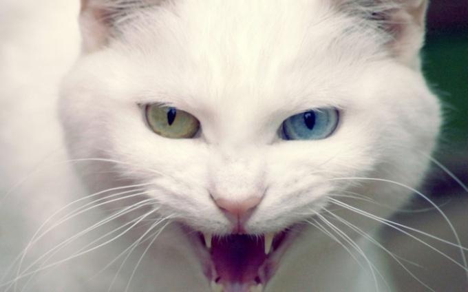 мокрые вавки у кота