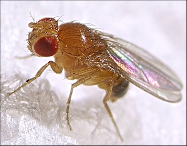 How to get rid of flies in apartment
