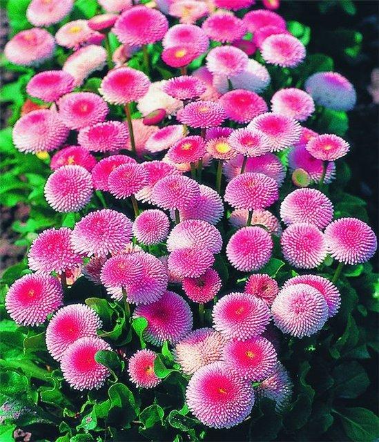 Как вырастить однолетние цветы