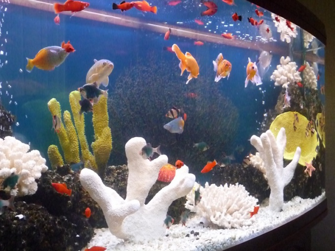 заселенность аквариума
