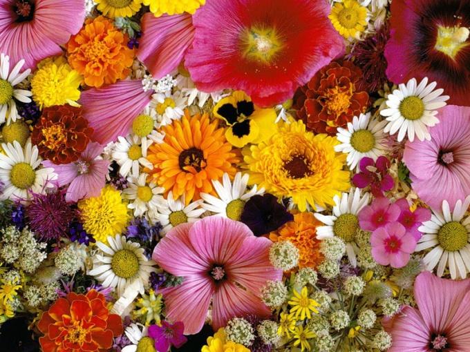 Как открыть салон цветов