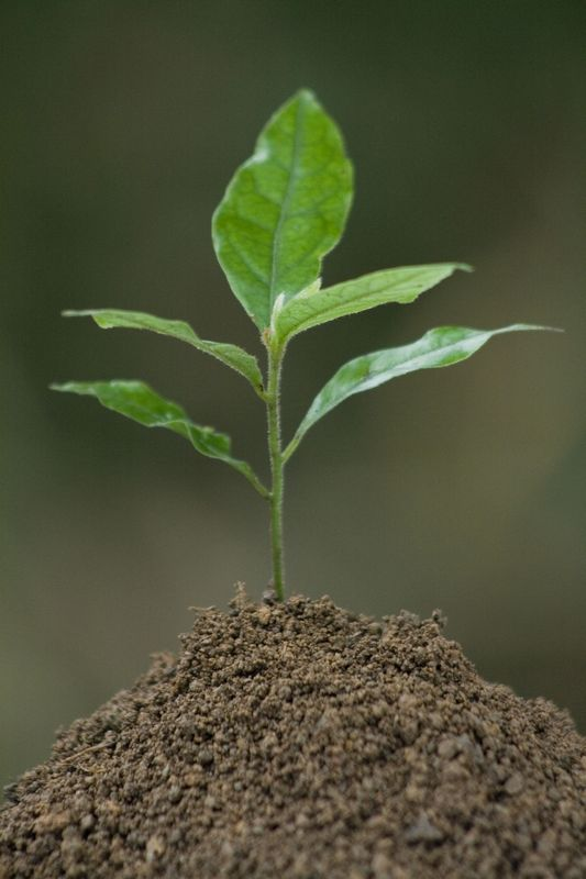 Как провести стратификацию семян
