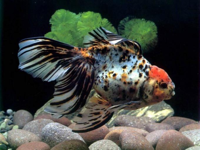 перевозка аквариумных растений