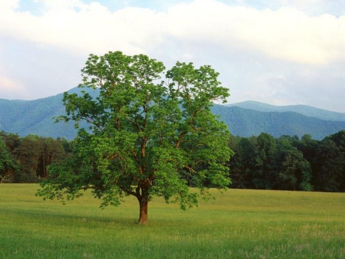 Как измерить высоту дерева