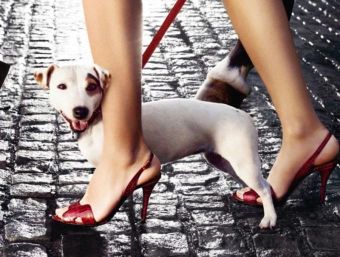 Как обучить собаку ходить на поводке