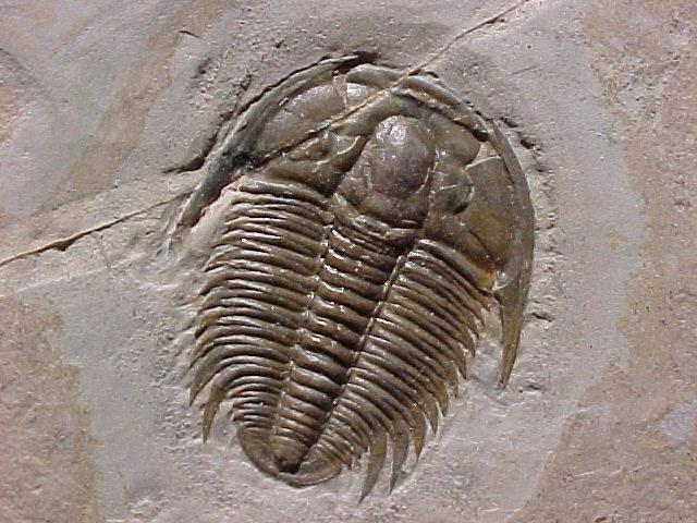 Что такое палеонтология