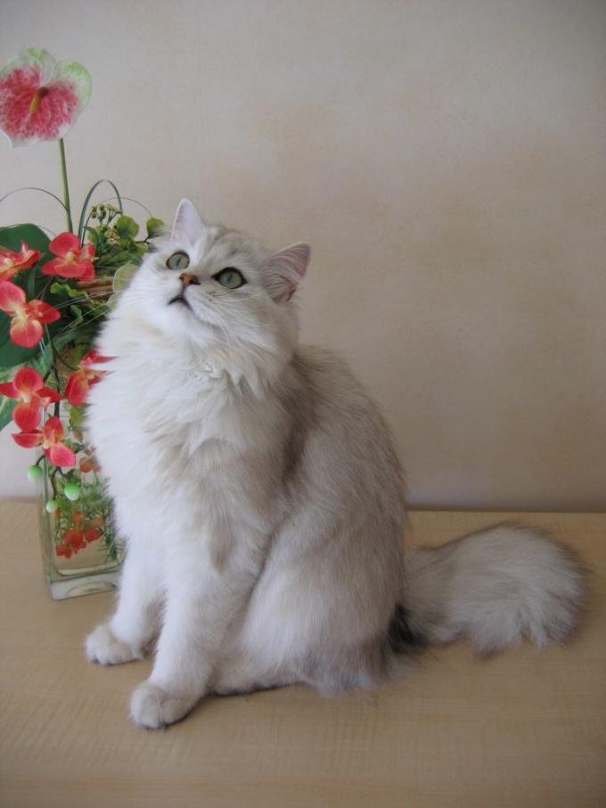 липидоз почек у кошек как лечить