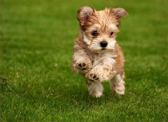 Как отучить щенка прыгать