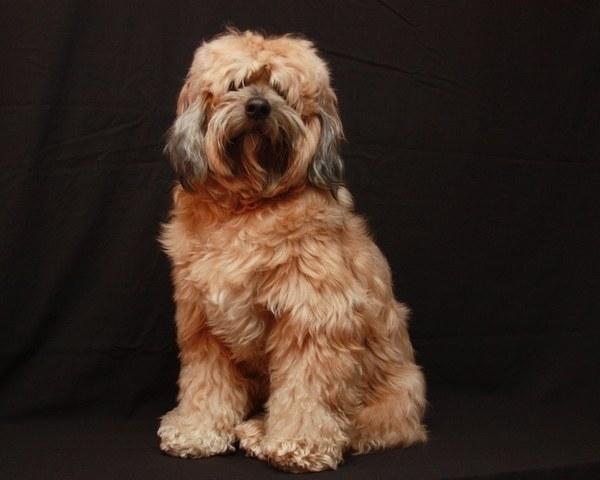 Как усовершенствовать состояние шерсти собаки