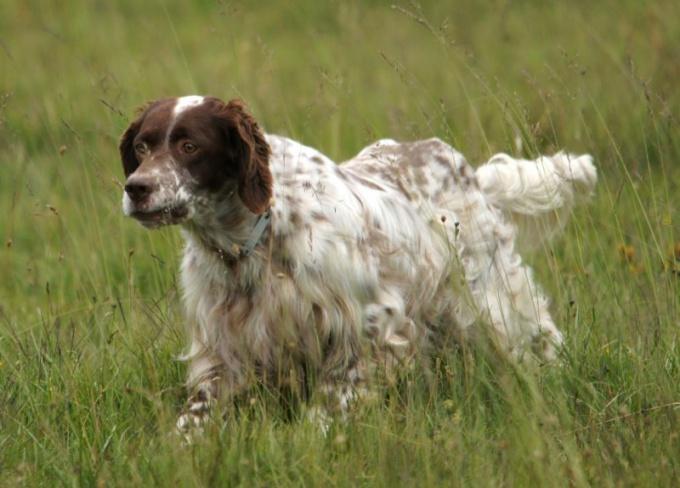 Как отучить взрослую собаку мочиться дома