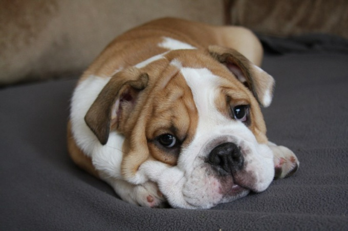 What to do if dog is poisoned