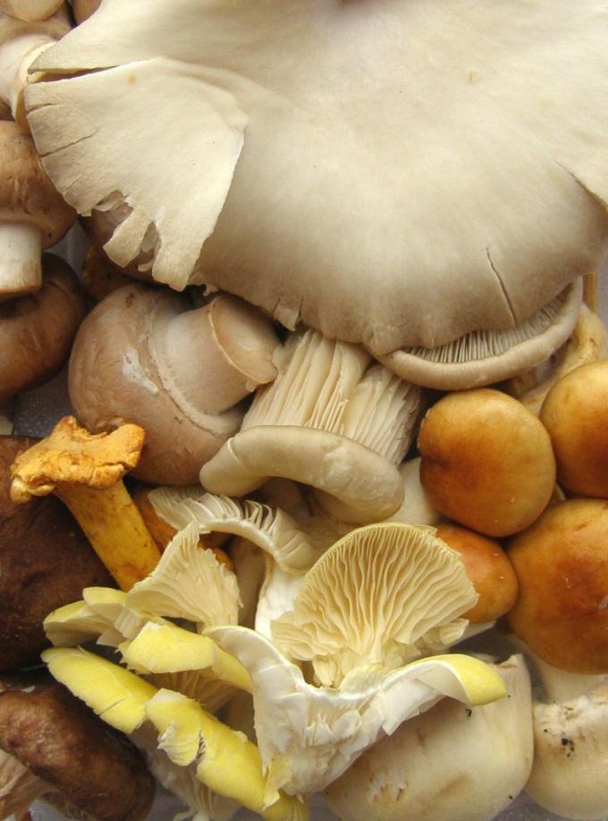 Как готовить грибы в сметане