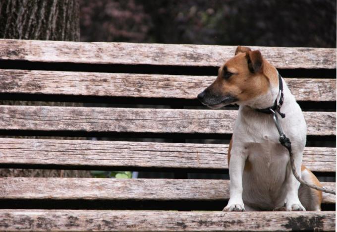 у собаки запор от костей