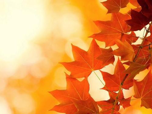Почему желтеют листья