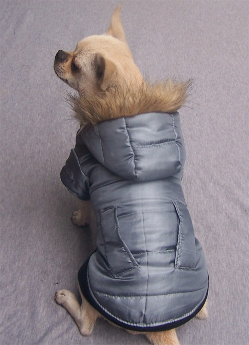 выкройка куртки для собаки