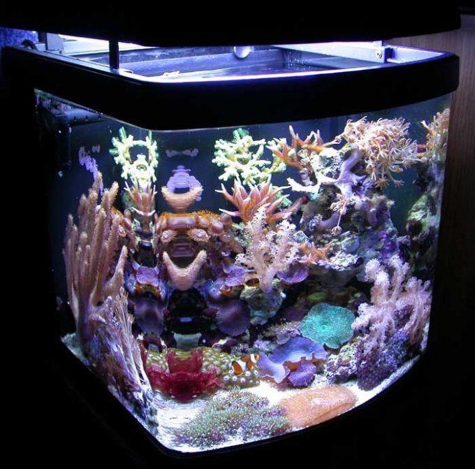 How to make an aquarium without fish