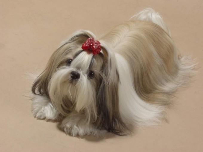 чем лечить понос от собаки