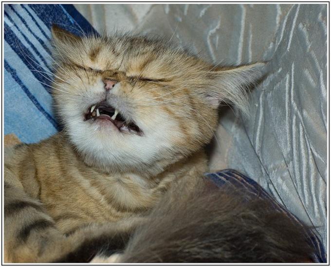что делать когда котёнок чихает
