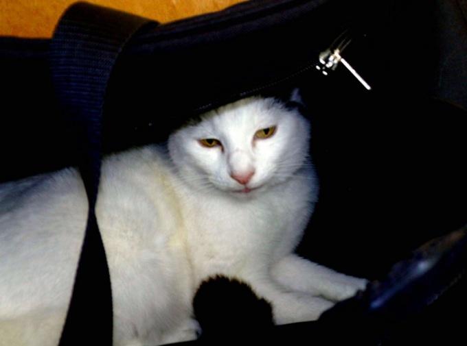 переноска для кошки своими руками