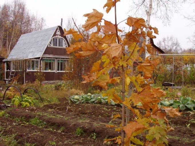 Как готовить садовые деревья к зиме
