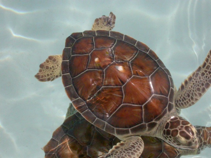 How to keep the house a sea turtle