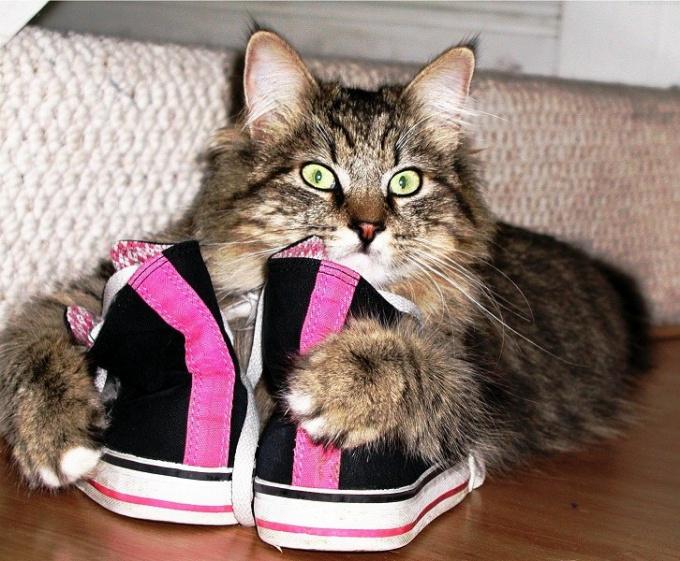 Отчего кошки любят валерьянку