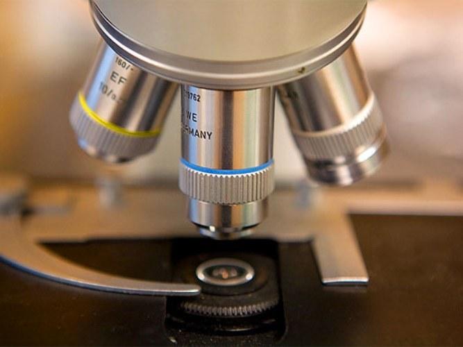 Как смотреть в микроскоп