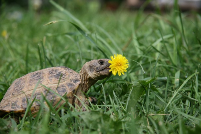 How to know the age of the tortoises