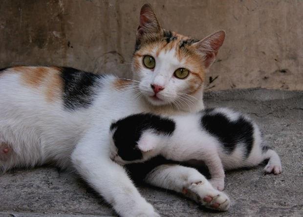 кошке не родит что делать