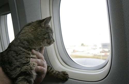 нужно чтобы вывезти кота на украину