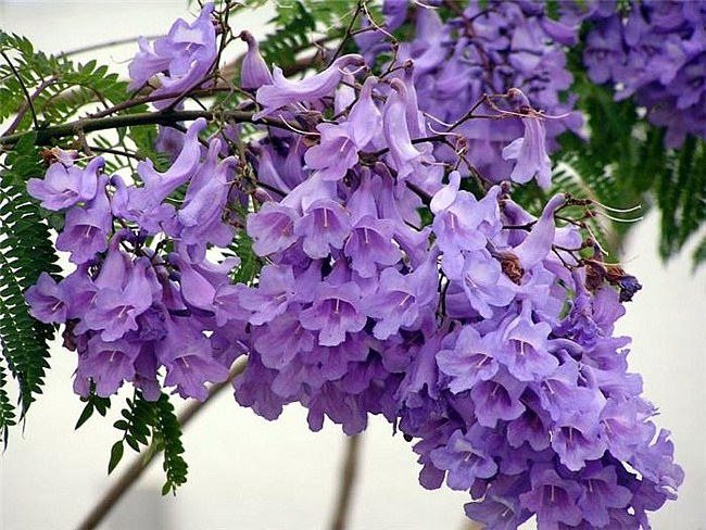 How to make lilac color