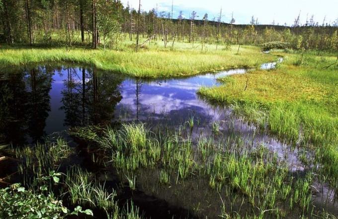 Почему надо охранять болота