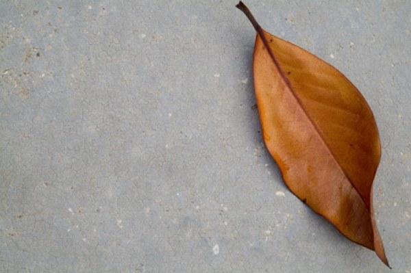 Как представить осень
