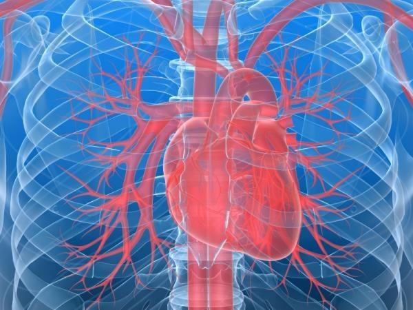 Почему сердце бьется