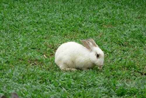 почему декоративный кролик кусается