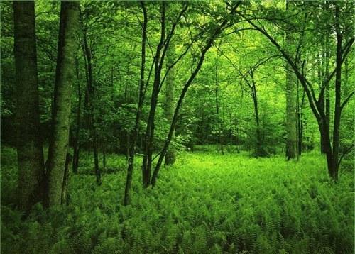 Почему мы должны беречь природу