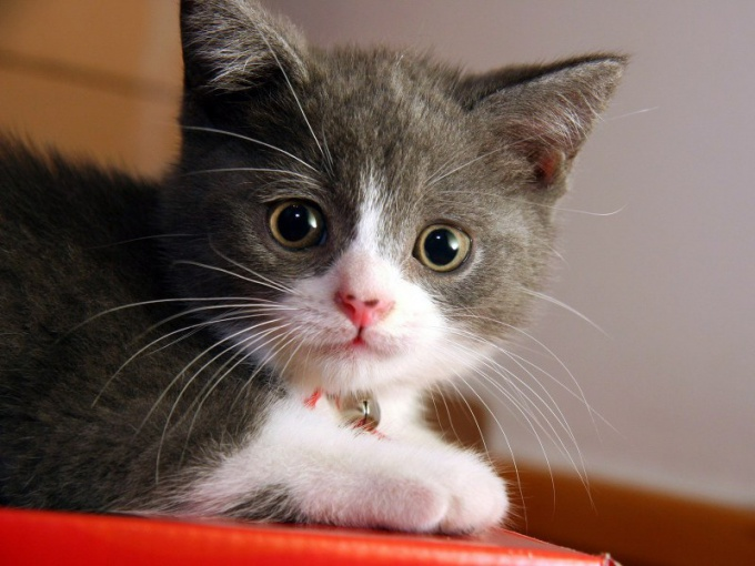 смекта дозировка для котят