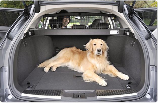 собаку тошнит в машине что делать