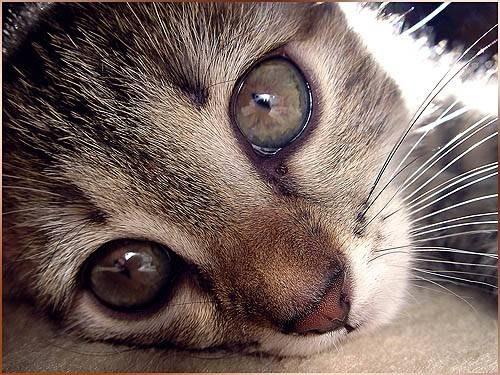 что сделать когда слезяться глаза у котёнка