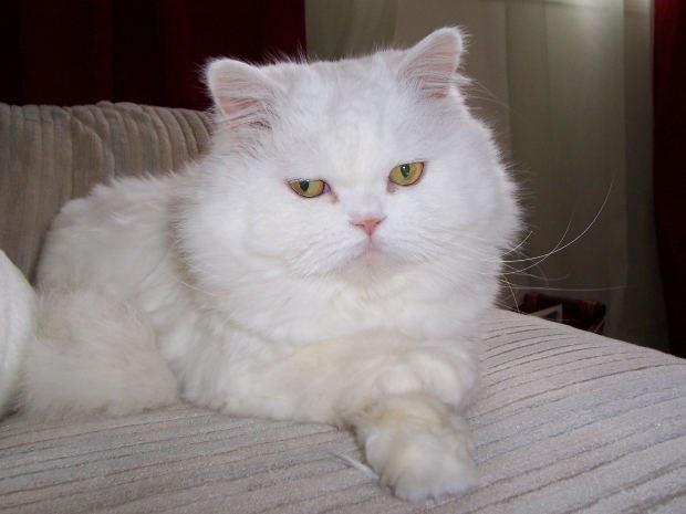 Как диагностировать заболевания кошек