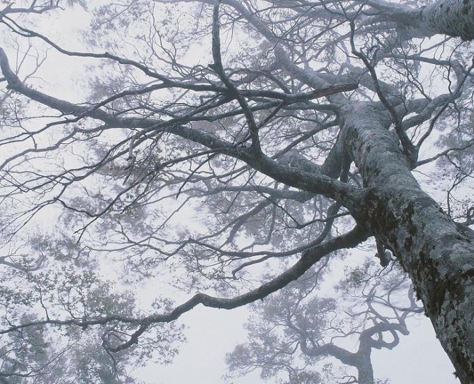 Почему важны деревья