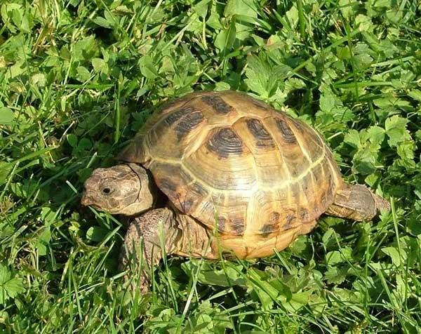 почему черепаха не ест