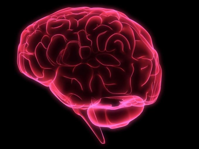 Как улучшить кровоснабжение мозга