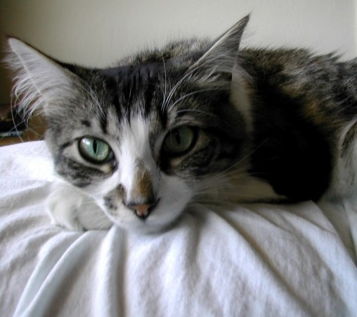 каклечитьраны у кота