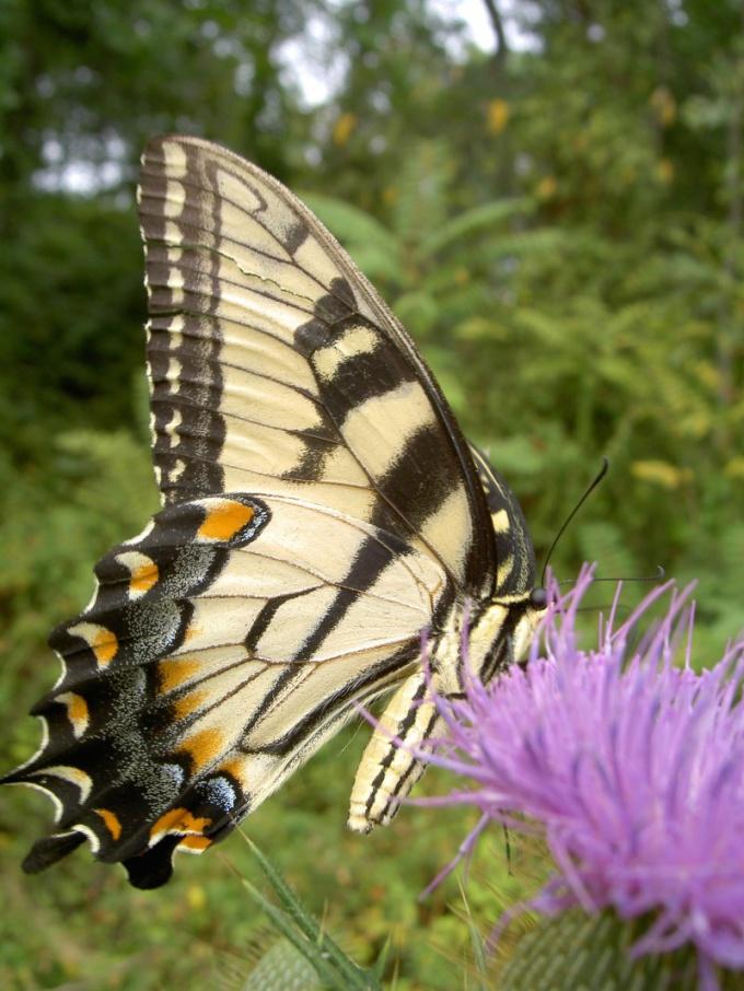 Как сохранить красоту природы