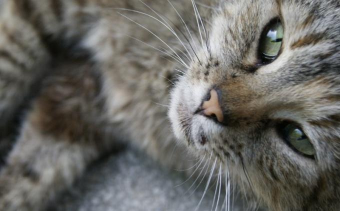 полезно если кот спит на людях?