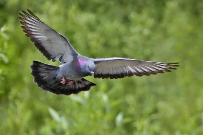 Почему птицы летают