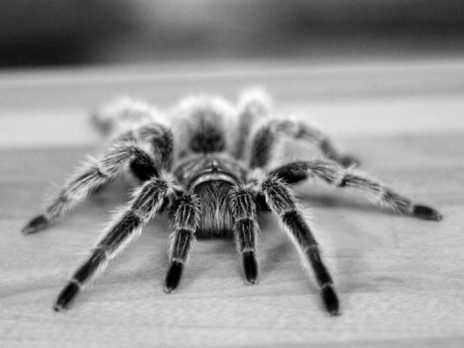 Как перестать боятся пауков