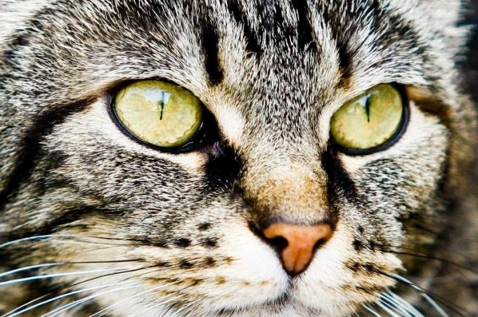 Как рисовать глаза кошки